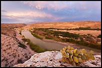 Cactus above Rio Grande River. Big Bend National Park, Texas, USA. (color)