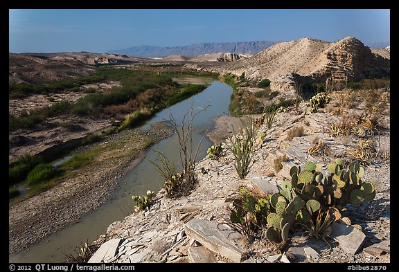 Cactus and Rio Grande River, morning. Big Bend National Park, Texas, USA.