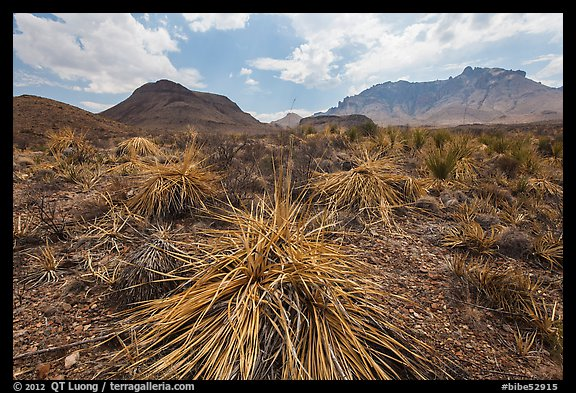 Chihuahuan desert in drought. Big Bend National Park (color)