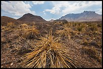 Chihuahuan desert in drought. Big Bend National Park ( color)