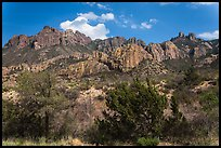 Trees in Chisos Mountains. Big Bend National Park ( color)
