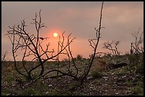 Sun through wildfire smoke and burned shrubs. Carlsbad Caverns National Park ( color)