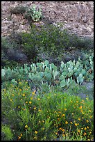 Wildflowers, cactus, shrubs, and rock. Carlsbad Caverns National Park ( color)