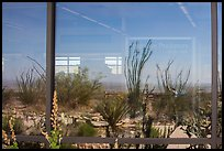 Ocotillos, yuccas and cactus, visitor center window reflexion. Carlsbad Caverns National Park, New Mexico, USA. (color)