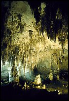 Fine Stalactites growing from ceiling of Papoose Room. Carlsbad Caverns National Park, New Mexico, USA. (color)
