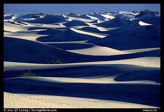 Mesquite Sand dunes, early morning. Death Valley National Park (color)