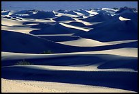 Mesquite Sand dunes, early morning. Death Valley National Park, California, USA.