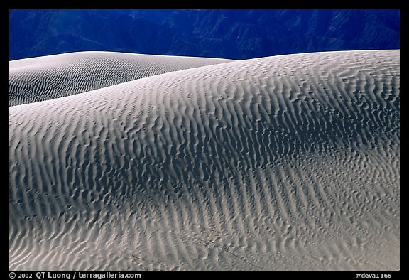 Ripples on Mesquite Sand Dunes, morning. Death Valley National Park