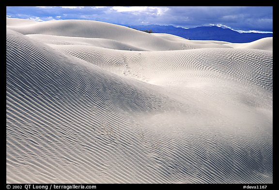 Mesquite Sand Dunes, morning. Death Valley National Park (color)