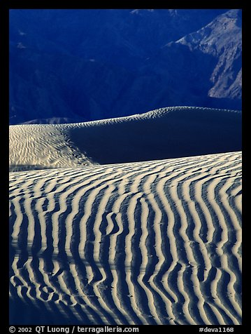 Ripples on Mesquite Sand Dunes, morning. Death Valley National Park (color)