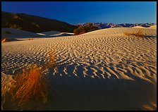 Ripples on Mesquite Dunes, early morning. Death Valley National Park, California, USA.