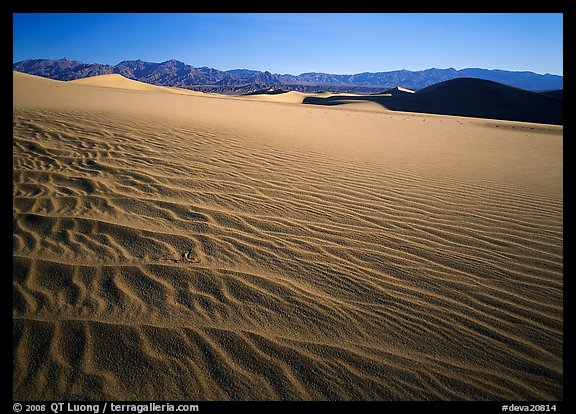 Ripples on Mesquite Dunes, early morning. Death Valley National Park (color)