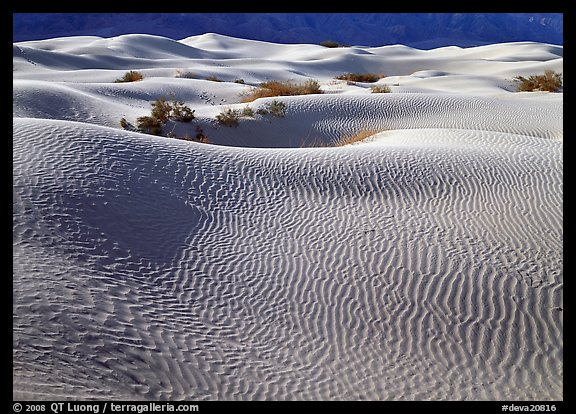Sand dunes and bushes. Death Valley National Park (color)