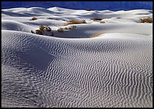 Sand dunes and bushes. Death Valley National Park, California, USA.