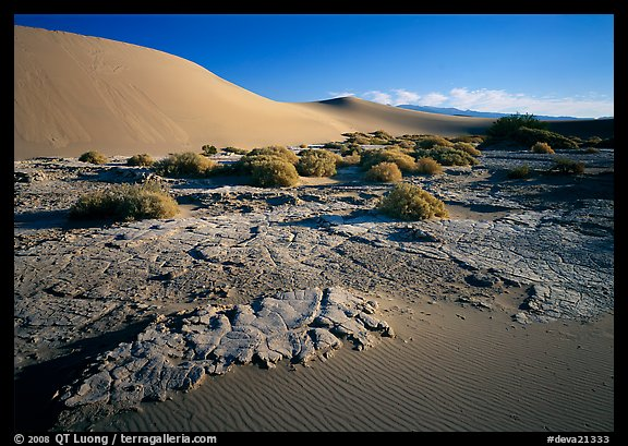 Mud formations in the Mesquite sand dunes, early morning. Death Valley National Park (color)