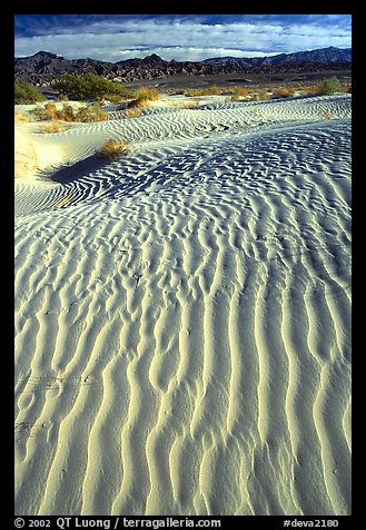 Ripples on Mesquite Sand Dunes. Death Valley National Park (color)