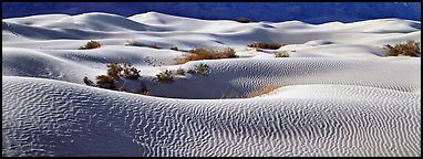 Expense of sand dunes with mesquite bushes. Death Valley National Park (Panoramic color)