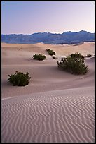 Ripples, mesquite on sand dunes, dawn. Death Valley National Park, California, USA.