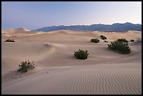 Sand dunes and mesquite bushes, dawn. Death Valley National Park, California, USA. (color)