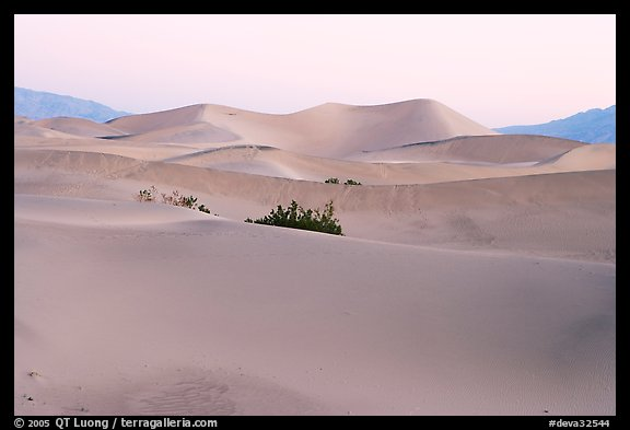 Mesquite sand dunes at dawn. Death Valley National Park (color)