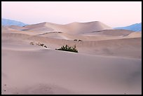Mesquite sand dunes at dawn. Death Valley National Park, California, USA. (color)