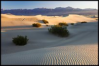 Sand dunes and mesquite bushes, sunrise. Death Valley National Park, California, USA.