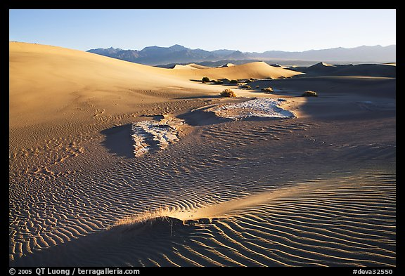 Depression in dunes with sand ripples, Mesquite Sand Dunes, early morning. Death Valley National Park, California, USA.