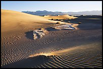 Depression in dunes with sand ripples, Mesquite Sand Dunes, early morning. Death Valley National Park, California, USA. (color)