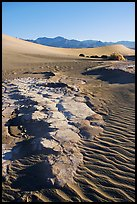 Cracked mud and sand ripples, Mesquite Sand Dunes, early morning. Death Valley National Park, California, USA. (color)