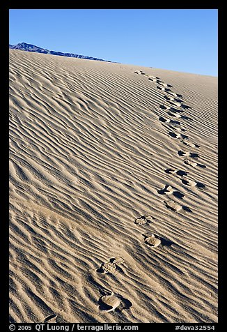 Footprints in the sand. Death Valley National Park, California, USA.