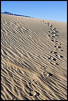 Footprints in the sand. Death Valley National Park, California, USA. (color)