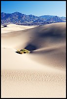 Depression in sand dunes, morning. Death Valley National Park, California, USA.