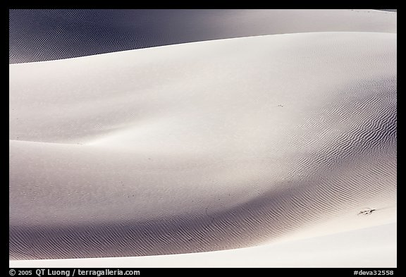 Sensuous forms, Mesquite Sand Dunes, morning. Death Valley National Park (color)