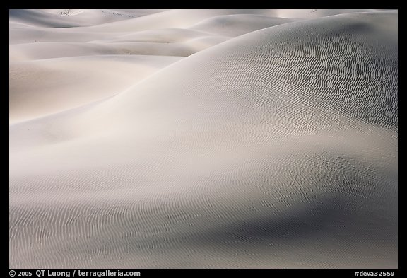 Sensuous forms in the sand, Mesquite Dunes, morning. Death Valley National Park, California, USA.