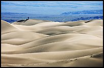 Dune ridges with photographer in the distance, Mesquite Sand Dunes, morning. Death Valley National Park ( color)