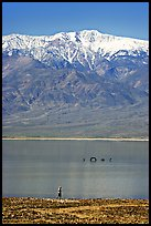 Visitor, ephemeral Loch Ness Monster in Manly Lake, and Telescope Peak. Death Valley National Park, California, USA.