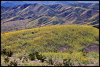 Butte and Owlshead Mountains, dotted with wildflowers. Death Valley National Park, California, USA.