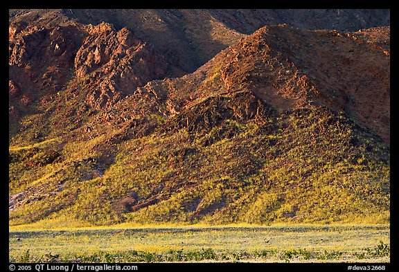 Desert Gold and mountains, late afternoon. Death Valley National Park (color)