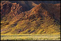 Desert Gold and mountains, late afternoon. Death Valley National Park, California, USA.