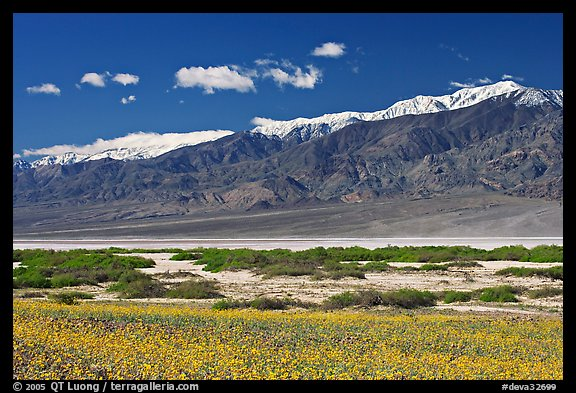 Yellow blooms, creek, and Panamint Range, morning. Death Valley National Park (color)