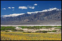 Yellow blooms, creek, and Panamint Range, morning. Death Valley National Park, California, USA. (color)