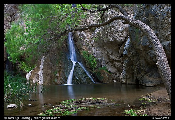 Desert Oasis with Darwin Falls. Death Valley National Park (color)