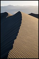Dune ridge, late afternoon. Death Valley National Park ( color)