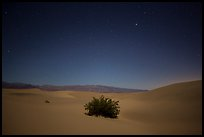 Mesquite bush in sand dunes at night. Death Valley National Park, California, USA.