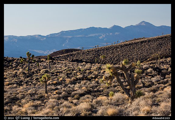 Slopes with Joshua Trees and Panamint Range. Death Valley National Park (color)