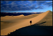 Hiking towards tall dune, the Mesquite Dunes, sunrise. Death Valley National Park, California, USA.