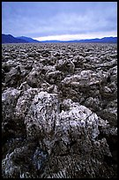 Salt formations at Devil's Golf Course. Death Valley National Park, California, USA. (color)