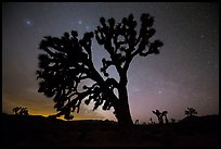 Joshua Trees and stars at night, Lee Flat. Death Valley National Park, California, USA.