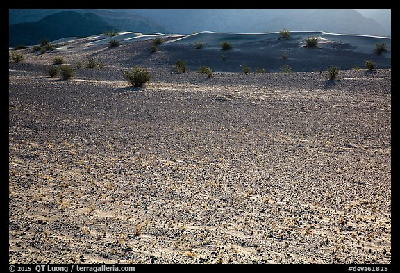 Ground littered with small rocks near Ibex Dunes. Death Valley National Park (color)