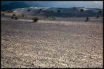 Ground littered with small rocks near Ibex Dunes. Death Valley National Park ( color)